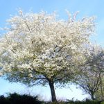 These are some of the native trees the Woodland Trust say you should plant
