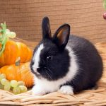 Can Rabbits Eat Grapes and Other Vegetables? Discover